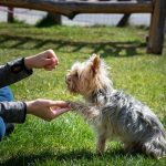 Is Training Your Dog by Yourself Possible?